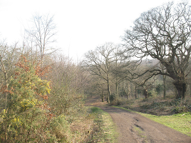 Epping Forest: footpath to Manor Road