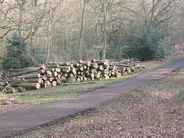 Epping Forest: new log pile