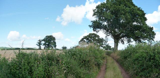 Mid Devon : Little Gornhay Lane
