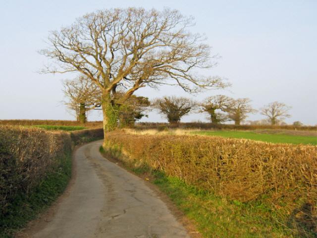Lane to Rexworthy Farm [2]