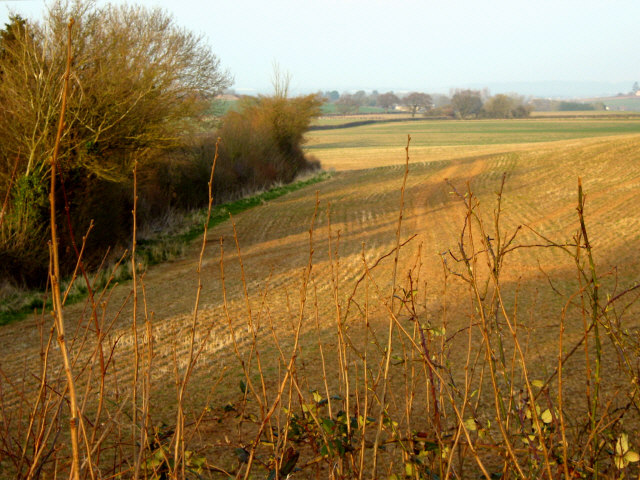 Field near Hollands Cottages