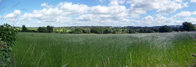 Mid Devon : Greenery & Countryside