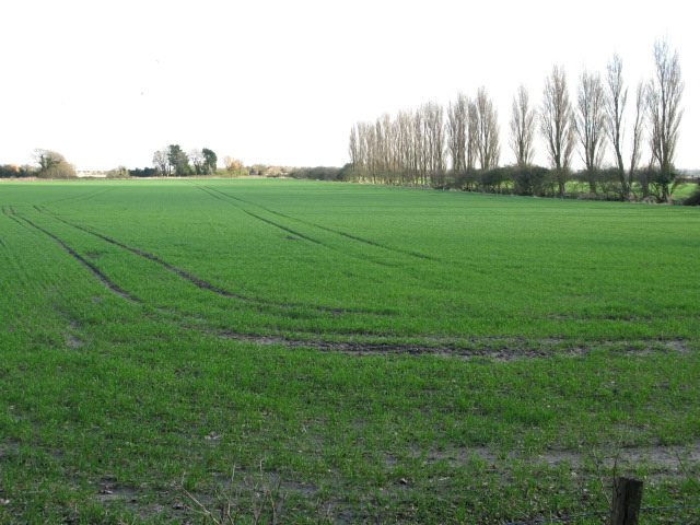 Farmland near Sandown Road