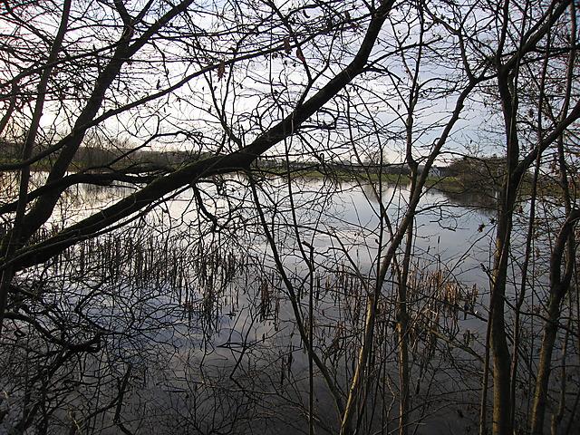 Lake at Maes-llyn, Cors Caron