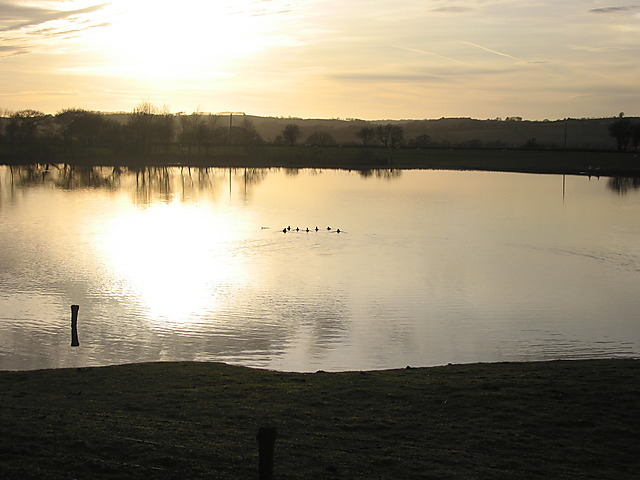 Ducks on Maes-llyn lake, Cors Caron
