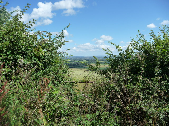 Mid Devon : View Between the Hedgerow