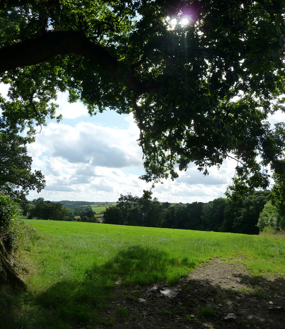 Mid Devon : View Under the Tree