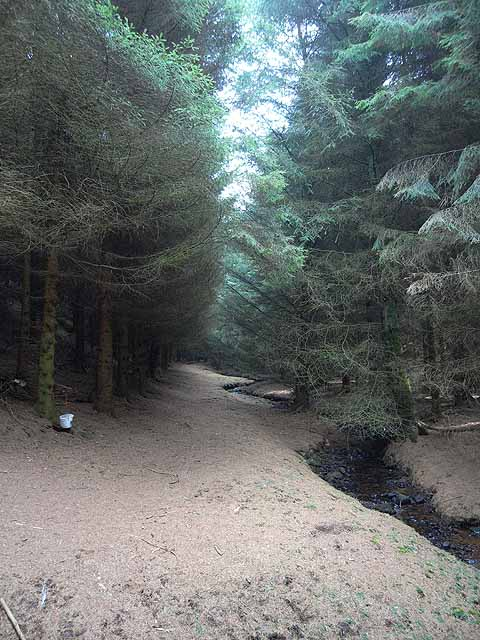 The path through Davygill Plantation