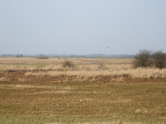 North Duffield Carrs