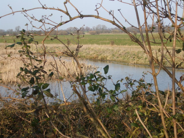 Nature Reserve Pond