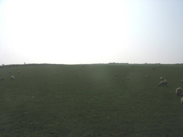 Sheep grazing on a rounded hill