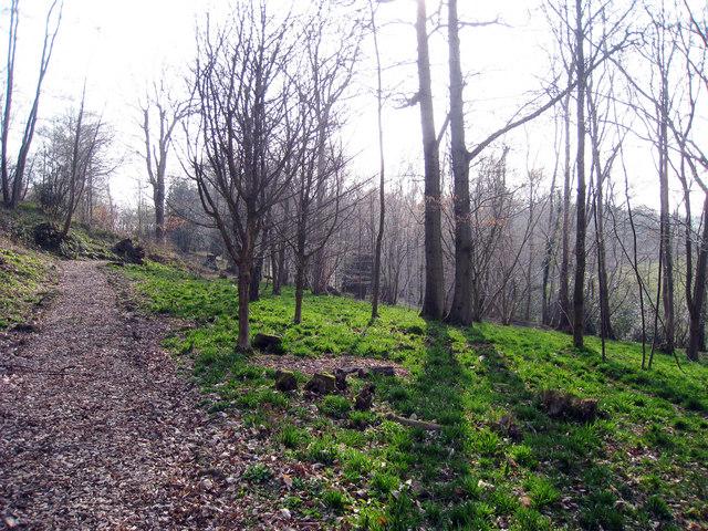 Woods near Highfields Farm