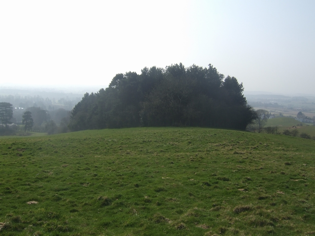 Woodland on Wychbury Hill