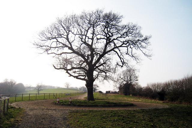 Horse Walker Tree