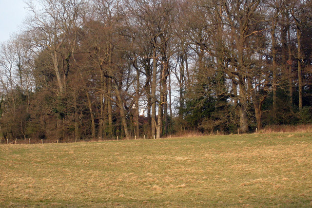 Woods next to Tidebrook Manor and Oast