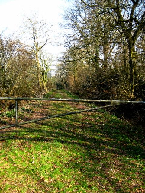 Bridleway to Melbury Osmond