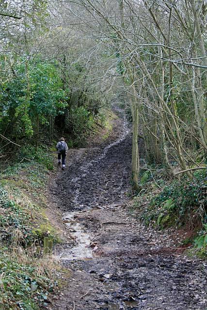 Green lane below Stoke Hill (2)