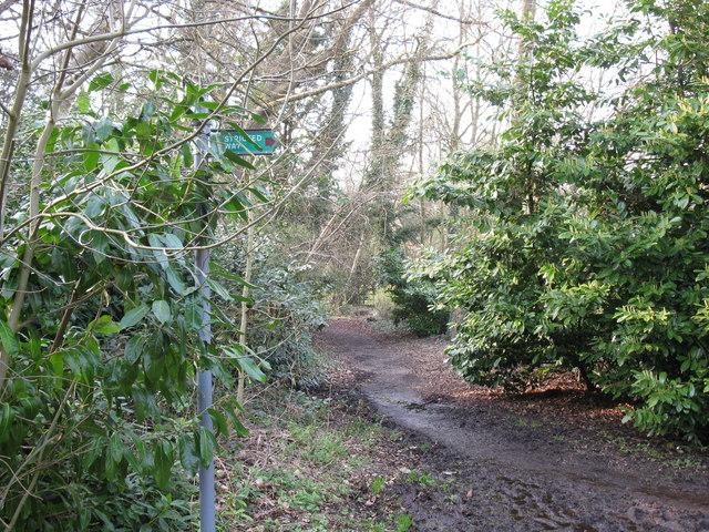 Footpath at Wick Hill