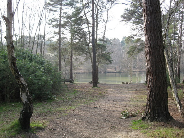 Heath Pond, Simon's Wood