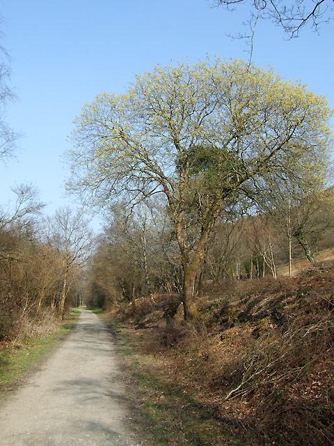 Footpath by Cors Caron, near Tregaron, Ceredigion