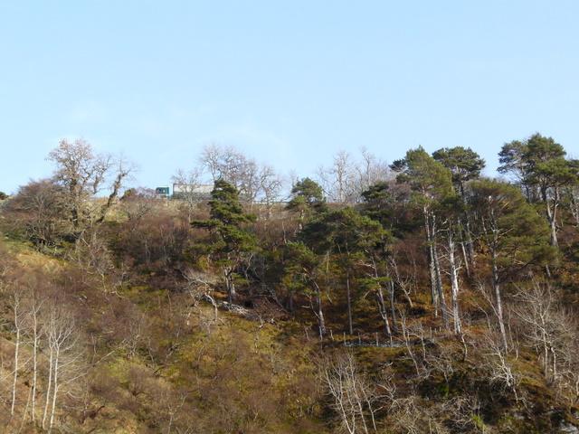 Wooded hillside near Berriedale