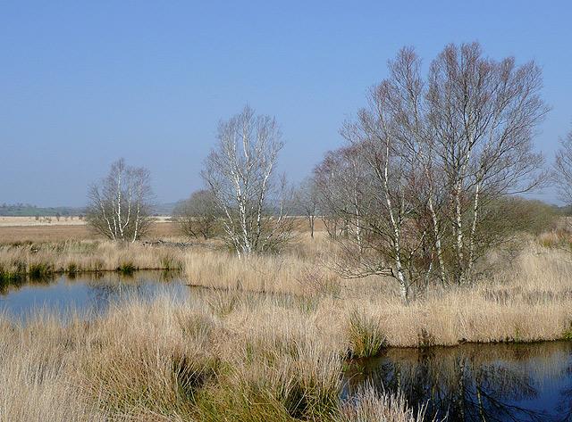 Pools on Cors Caron, near Tregaron, Ceredigion