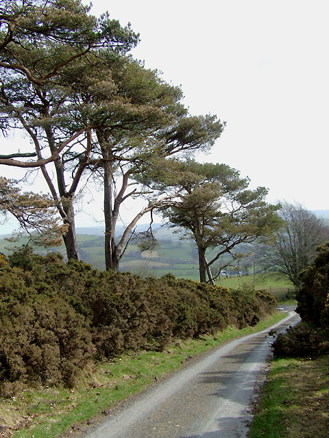 The lane to Llanycrwys, Carmarthenshire