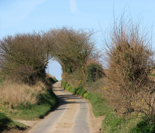A serpentine lane