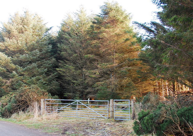 Gated track and coniferous woodland