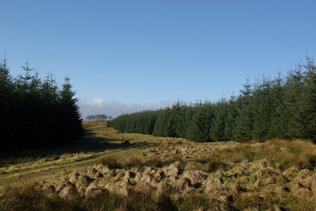 Forest track near Meathhill Moss