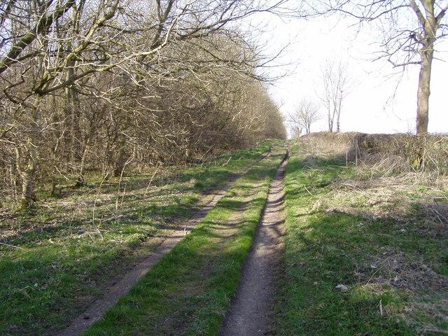 Track Beside Fox Colvert Plantation