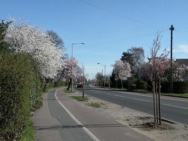 Spring blossom on Milton Road