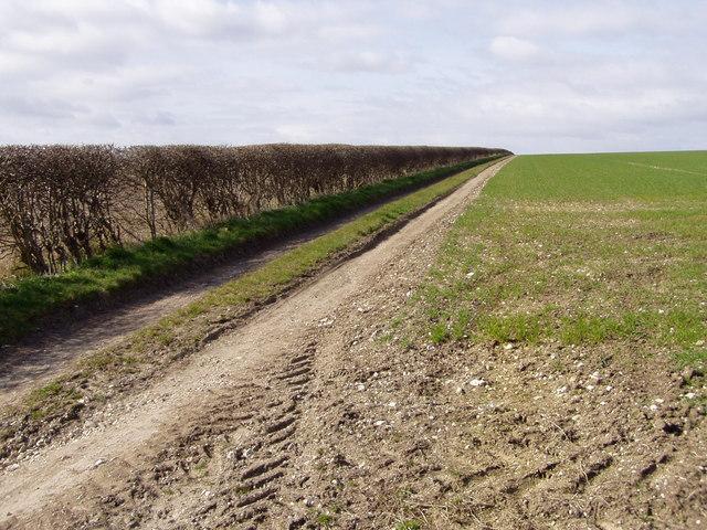 Track Over Boynton Field