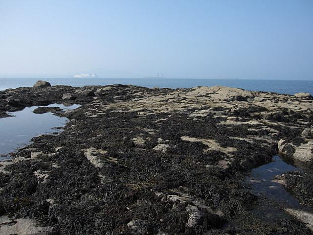 Rocky outcrop near Porth Dryw