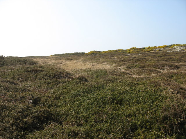 Heather moor south of Cerrig Brith