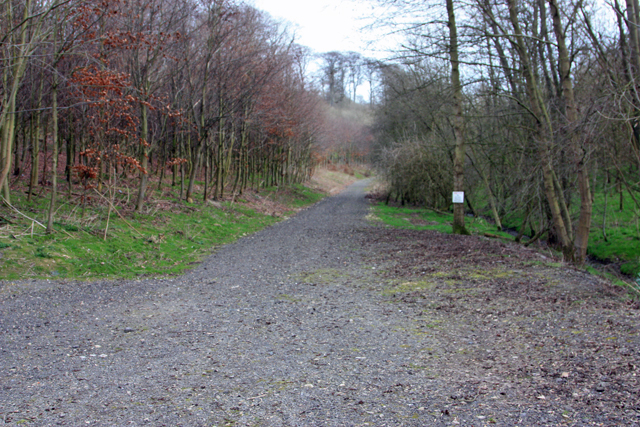 A track in Milldale Plantation