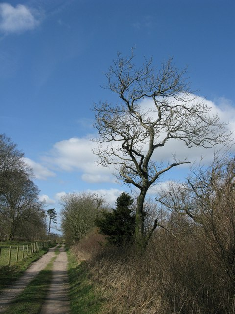 The bridleway atop Little Minterne Hill
