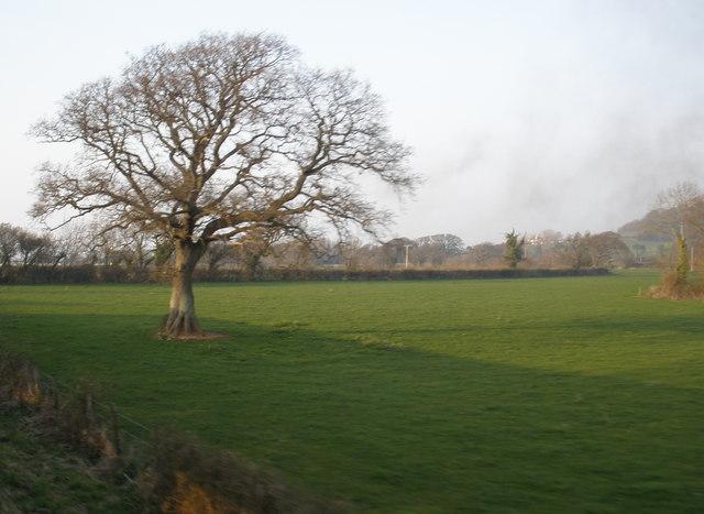 Field, near Old Cleeve