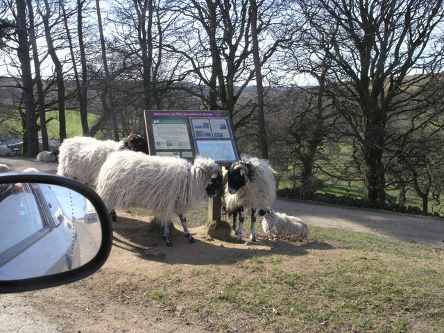A woolly welcome to Goathland Estate!
