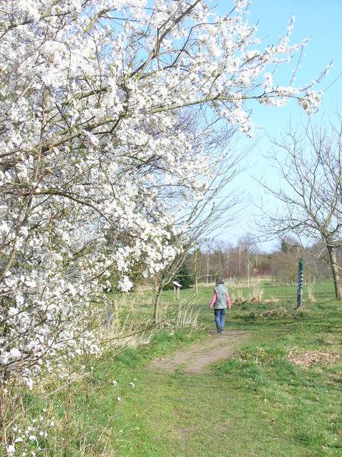 Spring in Onslow Arboretum