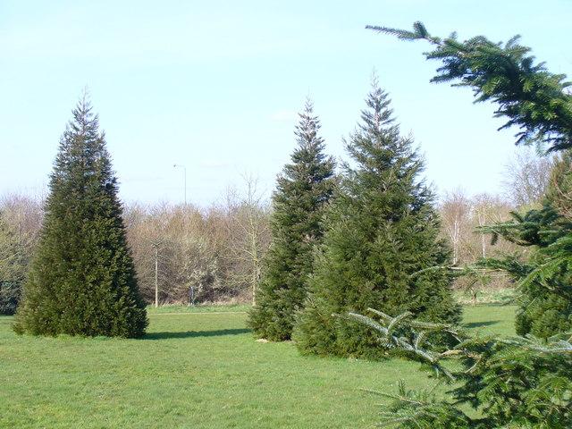 Specimen Trees, Onslow Arboretum