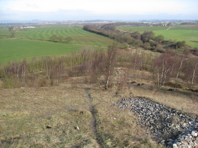 Morton Colliery Plantation - Footpath View