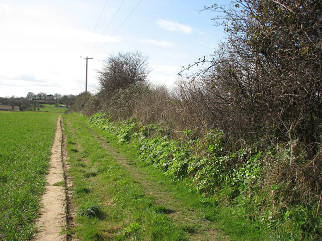 Hedge beside footpath