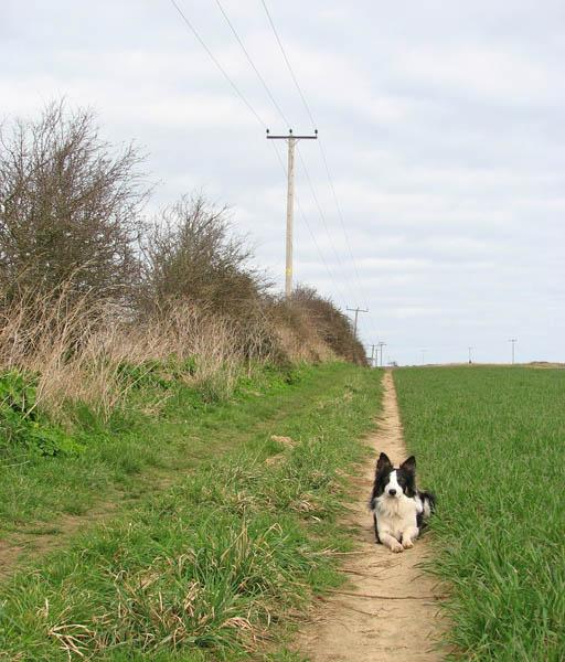 Path to Heath Lane