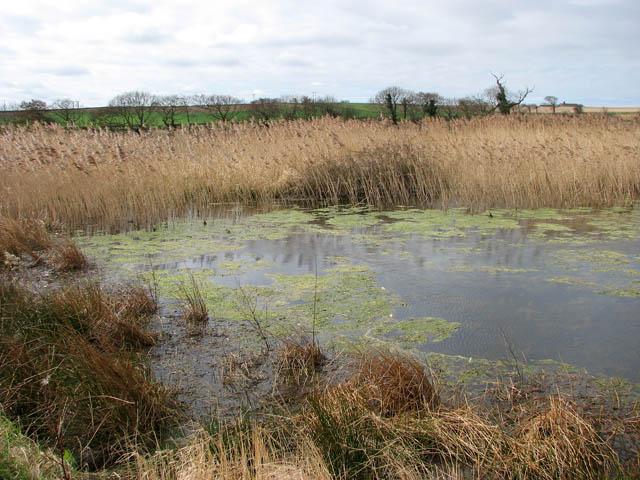 Reeds by Mundesley Beck