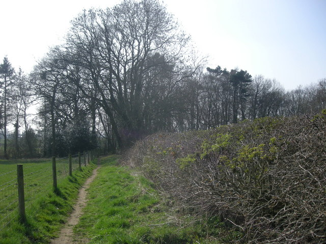 Cawston Wood