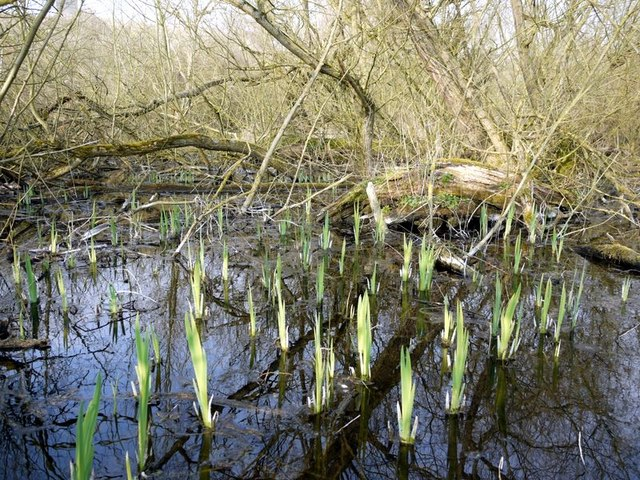 Flooded willow carr at Clayton's Wood