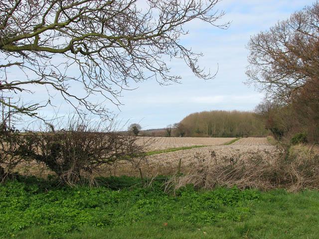 Field adjoining pasture