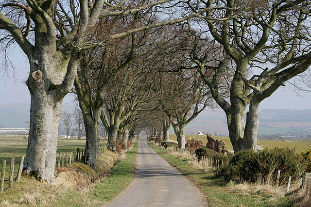 A beech avenue at Town-o'-Rule