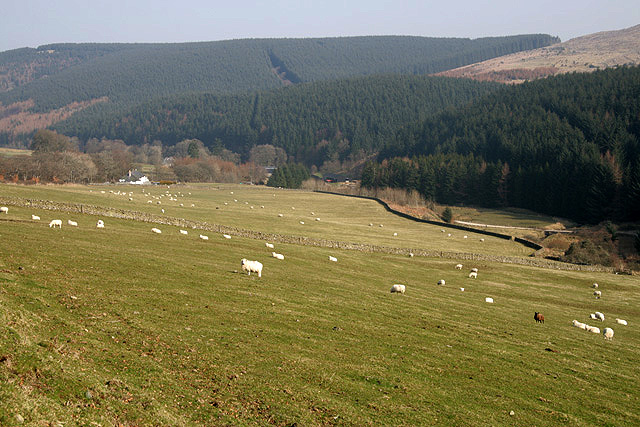 Farmland at Hyndlee Glen